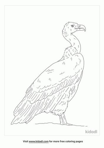 cape-vulture-coloring-page