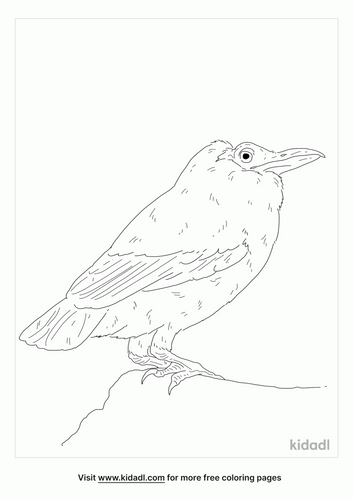 capuchin-bird-coloring-page