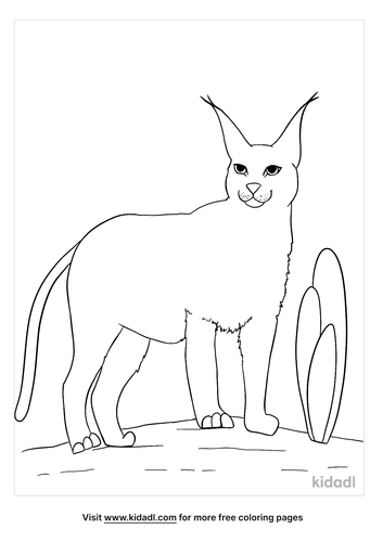 caracal coloring page-2-lg.png