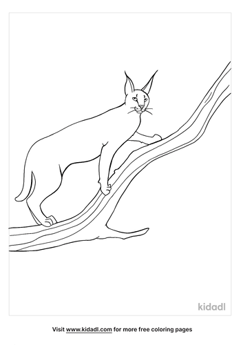caracal coloring page-3-lg.png