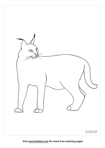 caracal coloring page-5-lg.png