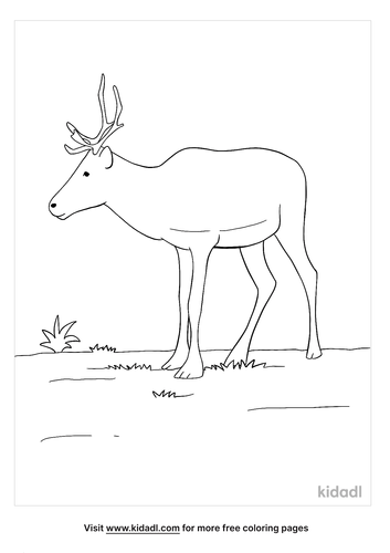 caribou coloring page-2-lg.png
