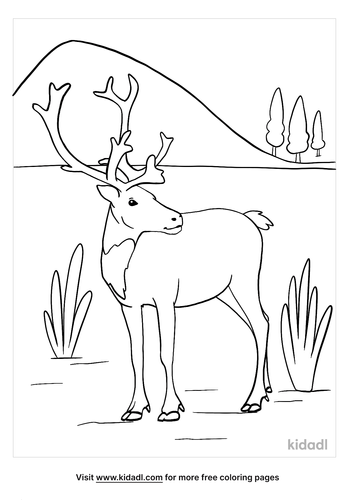 caribou coloring page-4-lg.png
