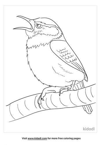 carolina wren coloring page-3-lg.png