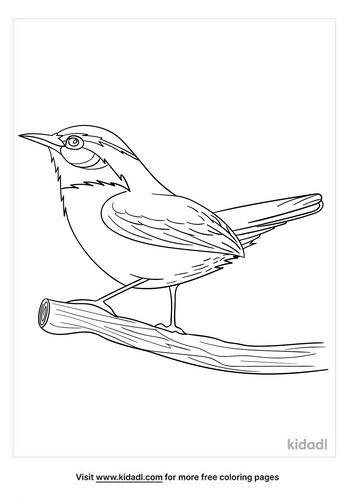 carolina wren coloring page-4-lg.png