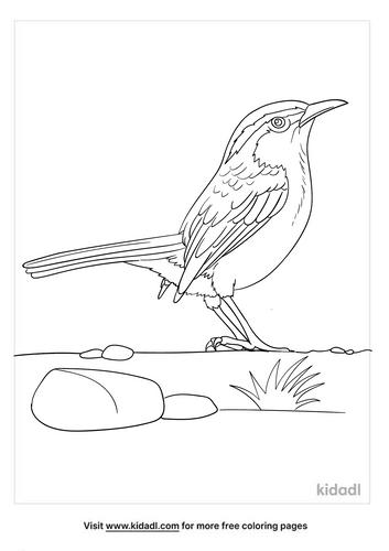 carolina wren coloring page-5-lg.png