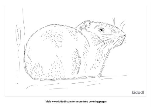 cavy-coloring-page