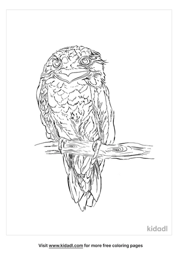 ceylon-frogmouth-coloring-page