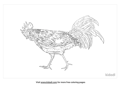 ceylon-jungle-fowl-coloring-page