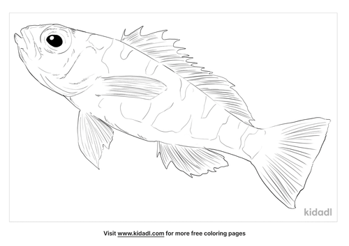 chalk-bass-coloring-page