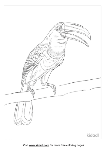 channel-billed-toucan-coloring-page