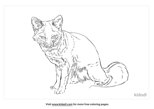 channel-island-fox-coloring-page