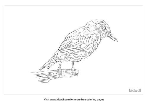 chestnut-bellied-nuthatch-coloring-page
