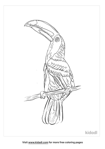 chestnut-mandibled-toucan-coloring-page