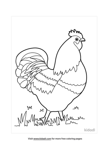 chicken coloring pages-1-lg.png