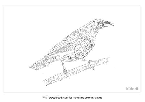 chihuahuan-raven-coloring-page
