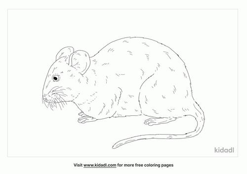 chinchilla-rat-coloring-page