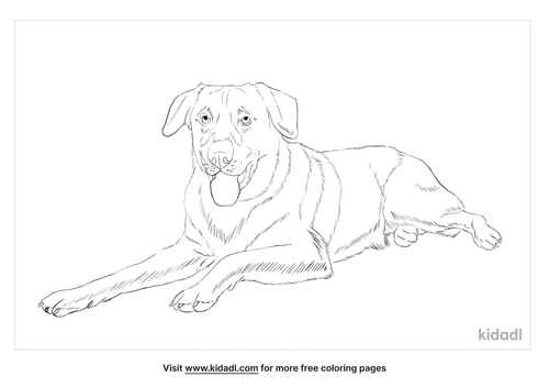 chinook-dog-coloring-page