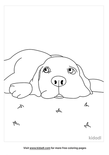 chocolate lab coloring pages-lg.png