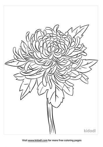 chrysanthemum coloring page-3-lg.png