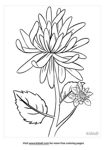 chrysanthemum coloring page-5-lg.png