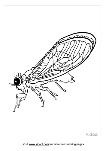 cicada coloring page-2-lg.png