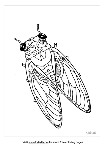 cicada coloring page-3-lg.png