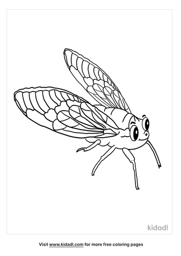 cicada coloring page-4-lg.png