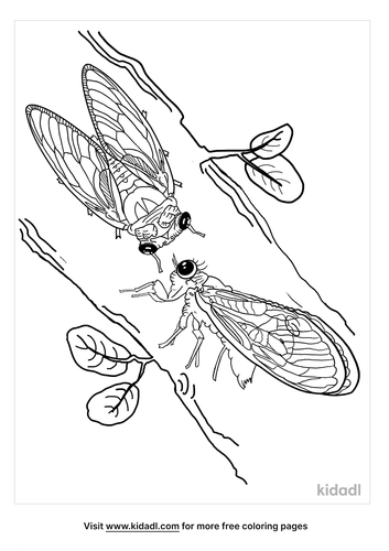 cicada coloring page-5-lg.png