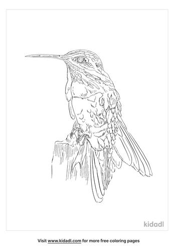 cinnamon-hummingbird-coloring-page