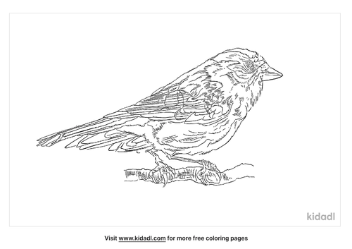 citril-finch-coloring-page