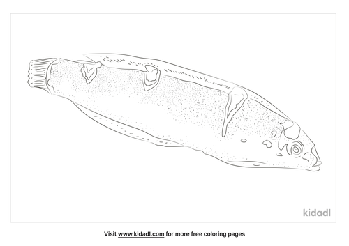 clown-wrasse-coloring-page