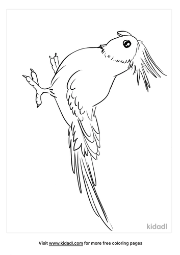 cockatiel coloring page_2_lg.png