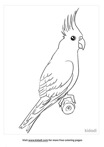 cockatiel coloring page_3_lg.png