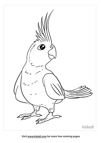 cockatiel coloring page_4_lg.png
