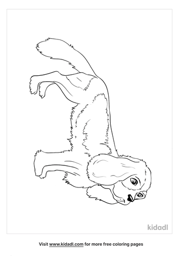 cocker spaniel coloring page_3_lg.png