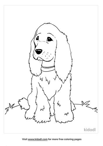 cocker spaniel coloring page_4_lg.png