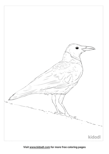 collared-crow-coloring-page