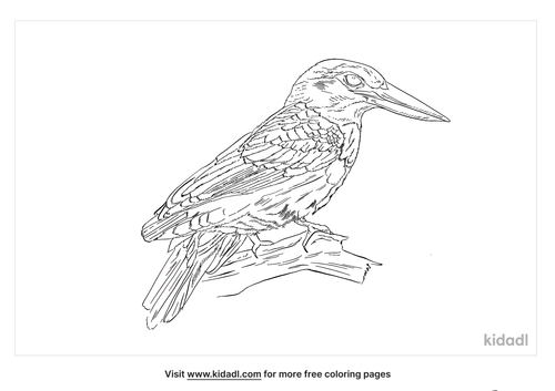 collared-kingfisher-coloring-page