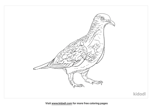 common-bronzewing-coloring-page