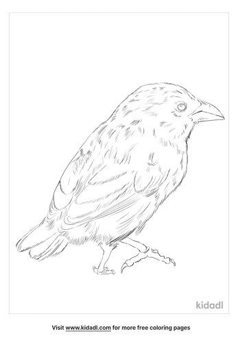 common-cactus-finch-coloring-page