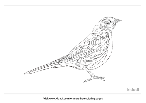 common-chaffinch-coloring-page