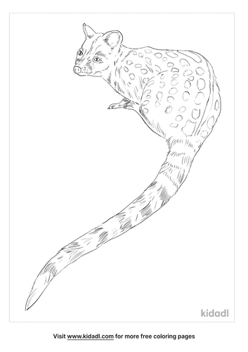 common-genet-coloring-page