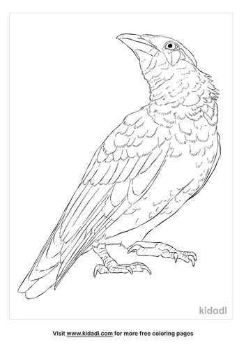 common-hill-myna-coloring-page