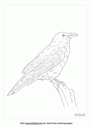 common-raven-coloring-page