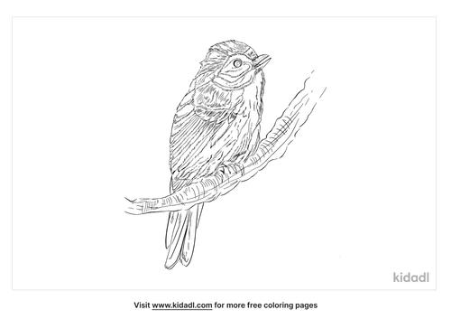cordilleran-flycatcher-coloring-page