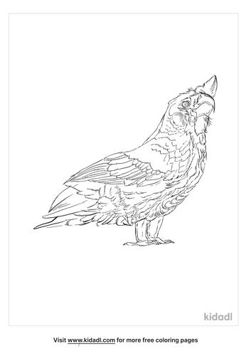 corella-coloring-page