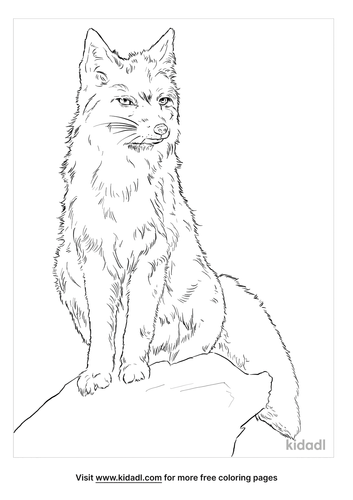corsac-fox-coloring-page