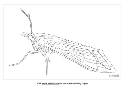 crambid-snout-moth-coloring-page