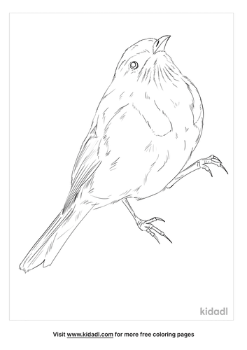crescent-honeyeater-coloring-page